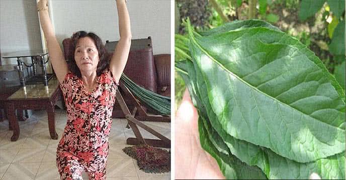 Cách Chữa Ung Thư Từ Cây Cỏ Mọc Nhiều Ở Việt Nam