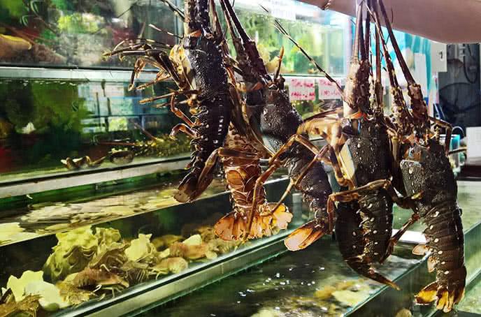 Nhà hàng Hải Sản Biển Đông luôn tự hào mang đến nguồn hải sản còn tươi sống